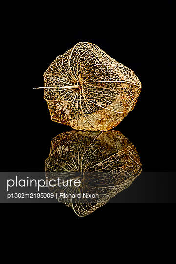 Physalis on a black reflective surface - p1302m2185009 by Richard Nixon