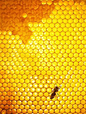 Honey bee Sweden - p312m1076841f by Jonn