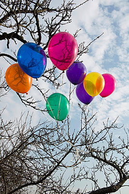 Balloons hanging in a tree - p451m953147 by Anja Weber-Decker
