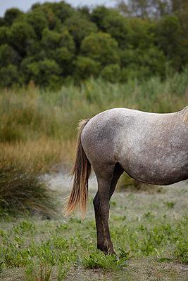 Pferd in der Camargue  - p4150312 von Tanja Luther