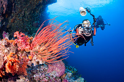 A photographer lines up with a SLR in a housing with a macro lens to shoot soft coral detail; Indonesia - p442m2074218 by Dave Fleetham