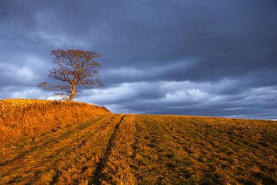 Sunshine and dark clouds - p1057m959288 by Stephen Shepherd