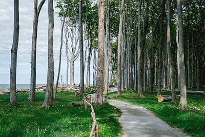Buchenwald an der Ostsee Küste - p1600m2230762 von Ole Spata