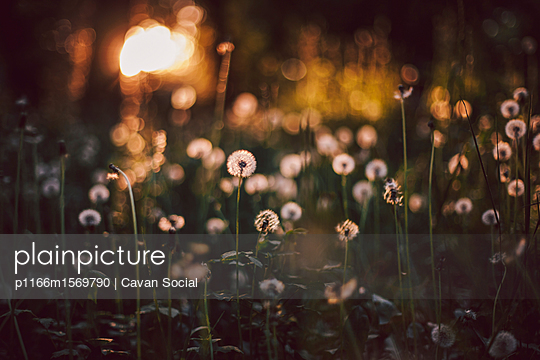 p1166m1569790 von Cavan Social
