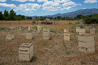 Beehive - p1291m1116105 by Marcus Bastel