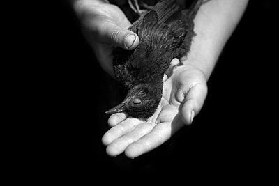 Toter Vogel - p1308m1143905 von felice douglas