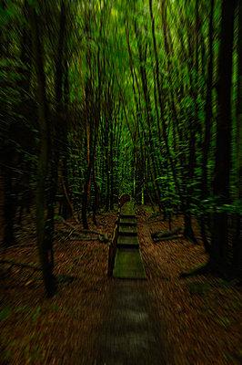 Waldweg - p416m990946 von Roland Liedke