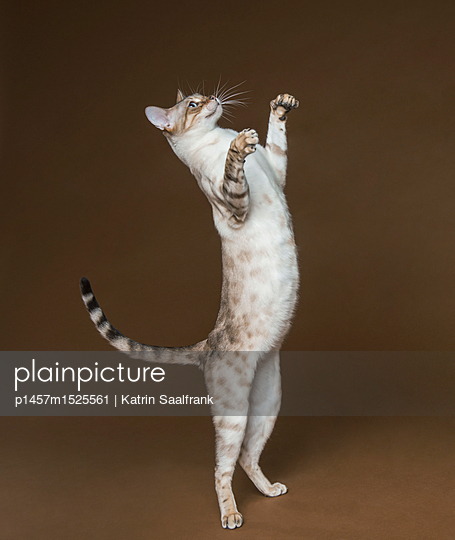 Katzen - p1457m1525561 von Katrin Saalfrank