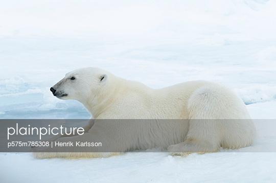 p575m785308 von Henrik Karlsson