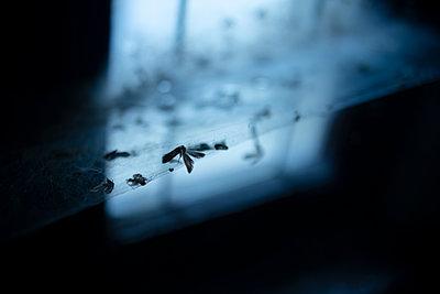 Fliegen im Netz - p1229m2019944 von noa-mar