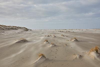Strand - p1294m1559435 von Sabine Bungert