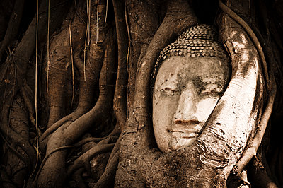 Head of Buddha statue overgrown with tree roots  - p1273m1496182 by Melanka Helms