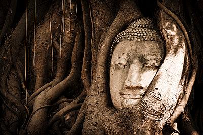 Von Wurzeln überwucherter Buddha-Kopf  - p1273m1496182 von melanka