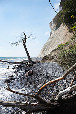 Branches on beach, cliffs on background - p312m971005f by Lena Koller