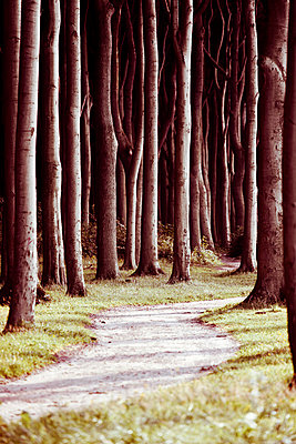 Forest path - p4320724 by mia takahara