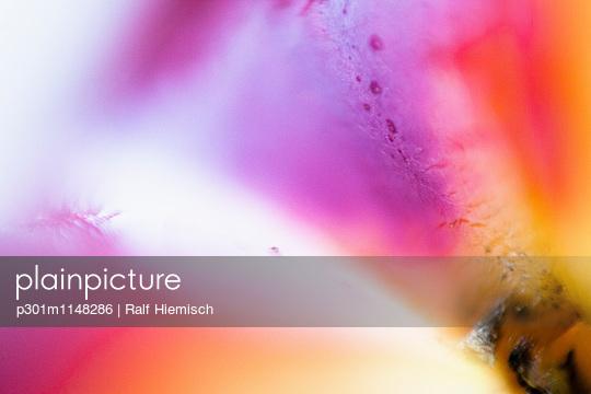 p301m1148286 von Ralf Hiemisch