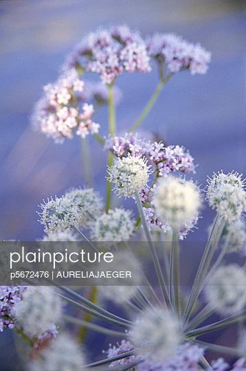 Blüten - p5672476 von AURELIAJAEGER