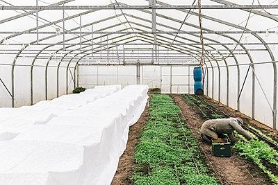 Greenhouse - p1085m2177956 by David Carreno Hansen