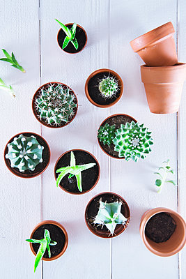 Cacti and succulents - p1149m2089580 by Yvonne Röder