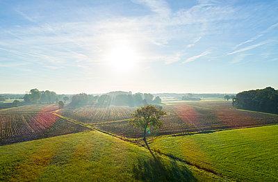 Field landscape in autumn sunlight, elevated view, Netherlands - p429m2058261 by Mischa Keijser