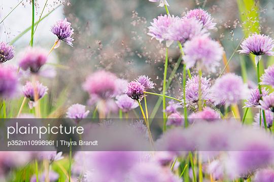 p352m1099896f von Thyra Brandt