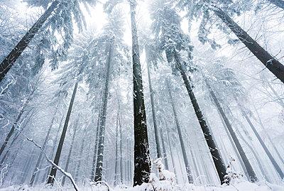 Wald im Winter - p1180m987369 von chillagano