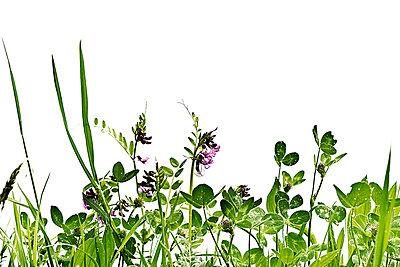 Blumenwiese - p6470135 von Tine Butter