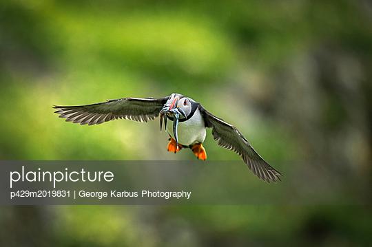 p429m2019831 von George Karbus Photography