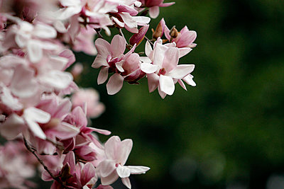 Blossoming - p3433178 by Jamie Rose