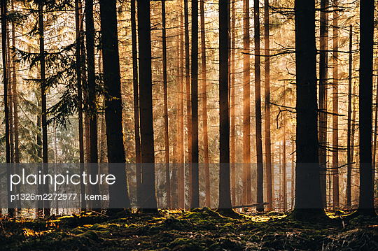 Sun rays in the forest - p1326m2272977 by kemai