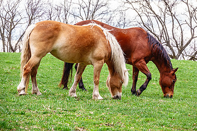 Two horses grazing in pasture at public equestrian center in spring - p1166m2084339 by Cavan Images
