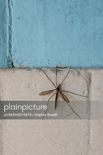 Mosquito - p1543m2215475 by Sophia Snadli