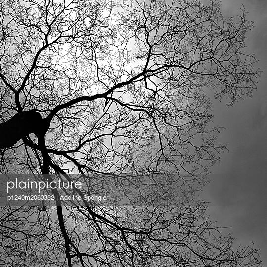 Tree in backlit - p1240m2063332 by Adeline Spengler