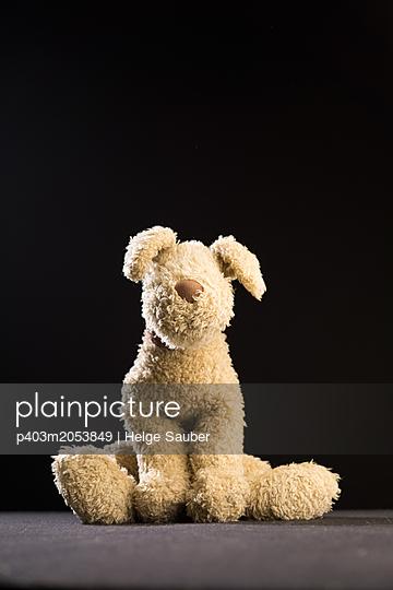 Teddyhund - p403m2053849 von Helge Sauber