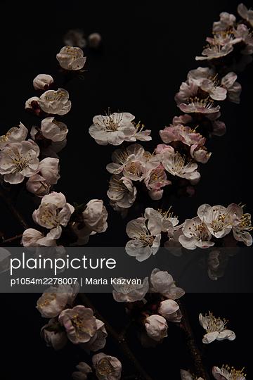 Blossoms - p1054m2278007 by Maria Kazvan