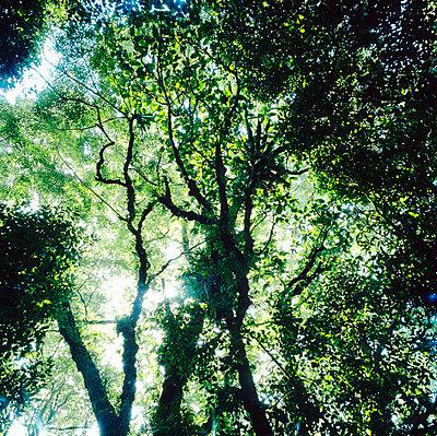 Regenwald auf den Seychellen - p1016m792613 von Jochen Knobloch