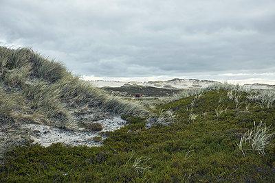 Dünenlandschaft auf Sylt - p1200m1147186 von Carsten Görling