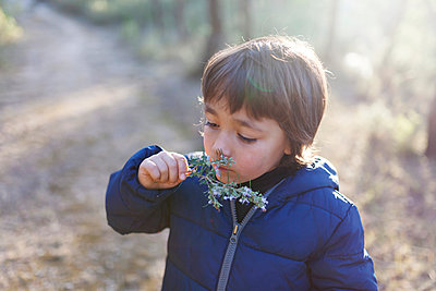 Little boy smelling blossoming twig of rosemary - p300m1113375f by Valentina Barreto