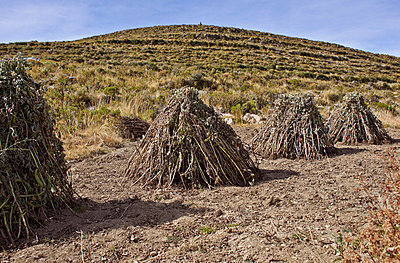 Ackerbau in Bolivien - p390m1190334 von Frank Herfort
