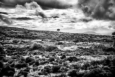 Mallorca - p416m1498053 von Jörg Dickmann Photography