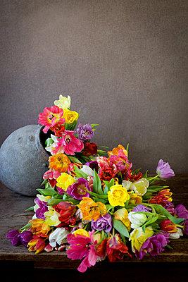 Tulpen - p619m1159974 von Samira Schulz