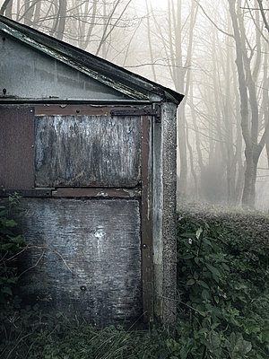 Old abandoned shed in misty forest - p1280m2207579 by Dave Wall