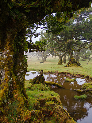 Portugal, Laurel forest in Madeira - p1600m2175658 by Ole Spata