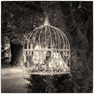 Old-fashioned bird cage - p1154m1425738 by Tom Hogan