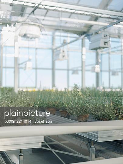 Plants growing in greenhouse seen through window - p300m2214014 by Joseffson