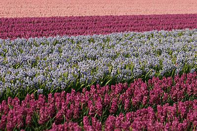 Blumenfelder - p4170012 von Pat Meise
