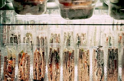 Verpackte Sandwichbrote - p1210m1216916 von Ono Ludwig