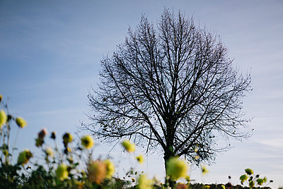 Spring - p586m966603 by Kniel Synnatzschke