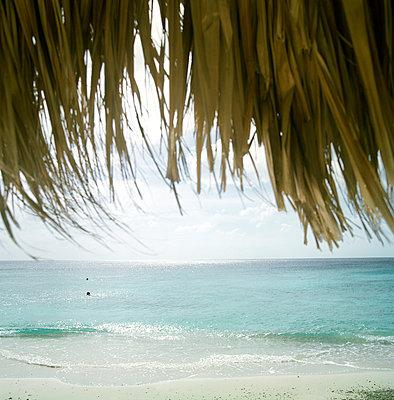 Tropical beach - p1231m1055673 by Iris Loonen