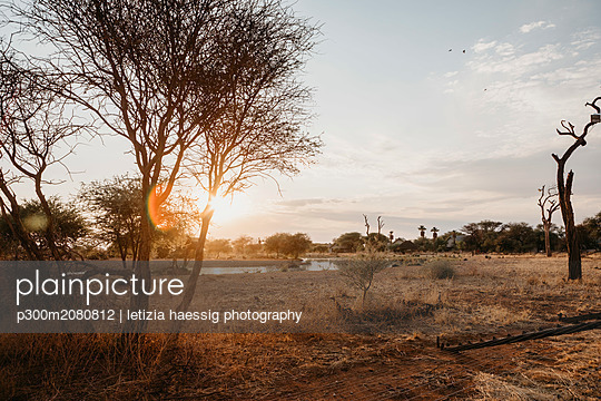 Africa, Namibia, Erindi Private Game Reserve - p300m2080812 by letizia haessig photography